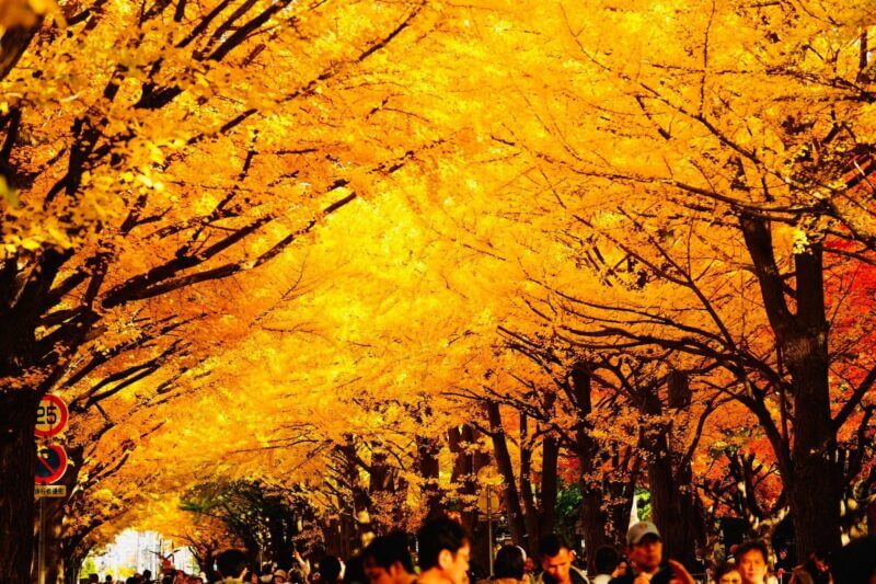 Best places to view autumn leaves in Hokkaido vol. 2