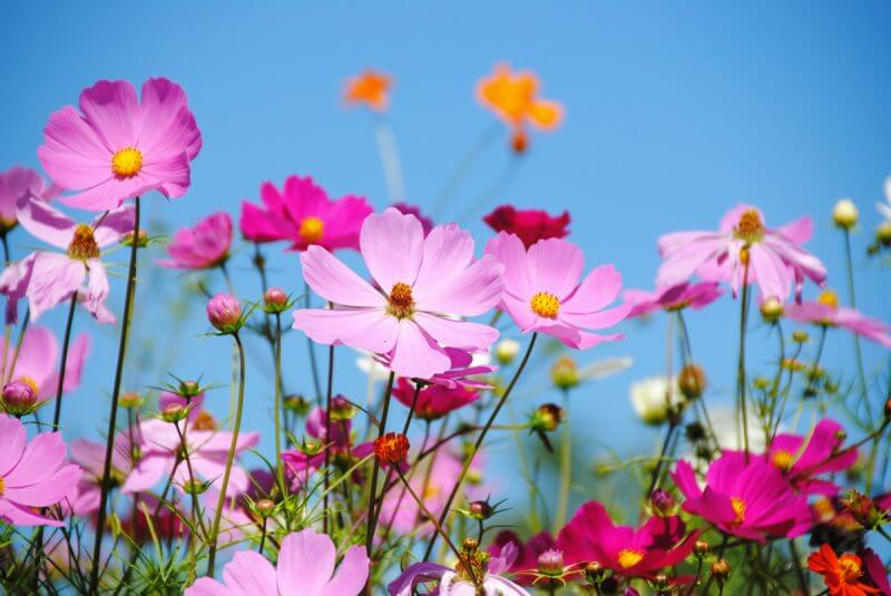 Best Places to View Flowers in Hokkaido vol. 2