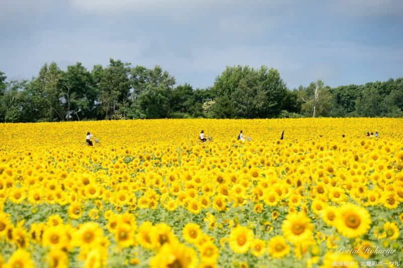Best Places to View Flowers in Hokkaido vol.1