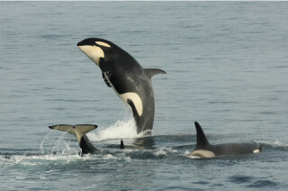 Ride Waves with Whales off the Shiretoko Coast