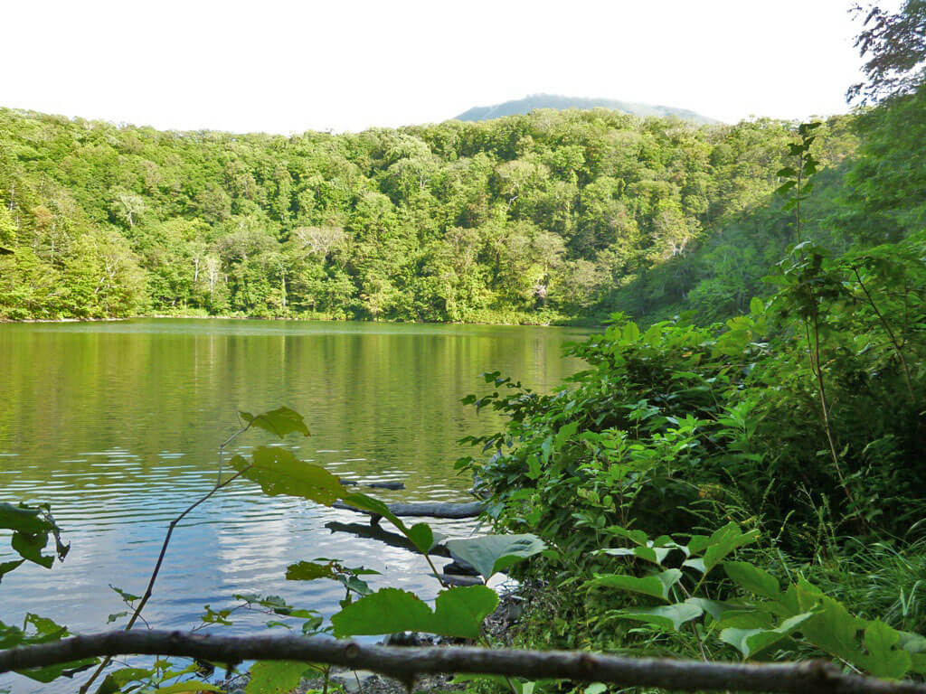 Hiking and Nature Tour at Shinsen Marsh