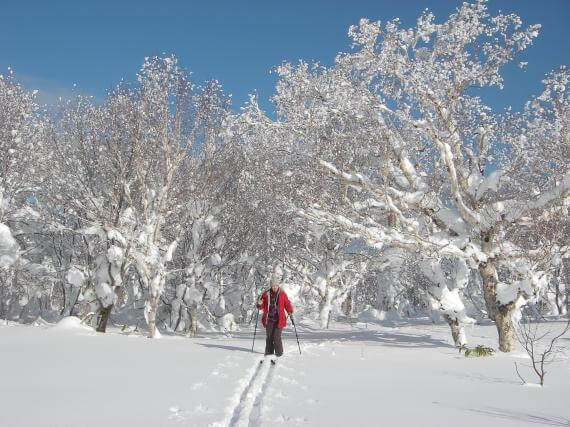 A Cross Country Ski Exploration of Backcountry Hakodate