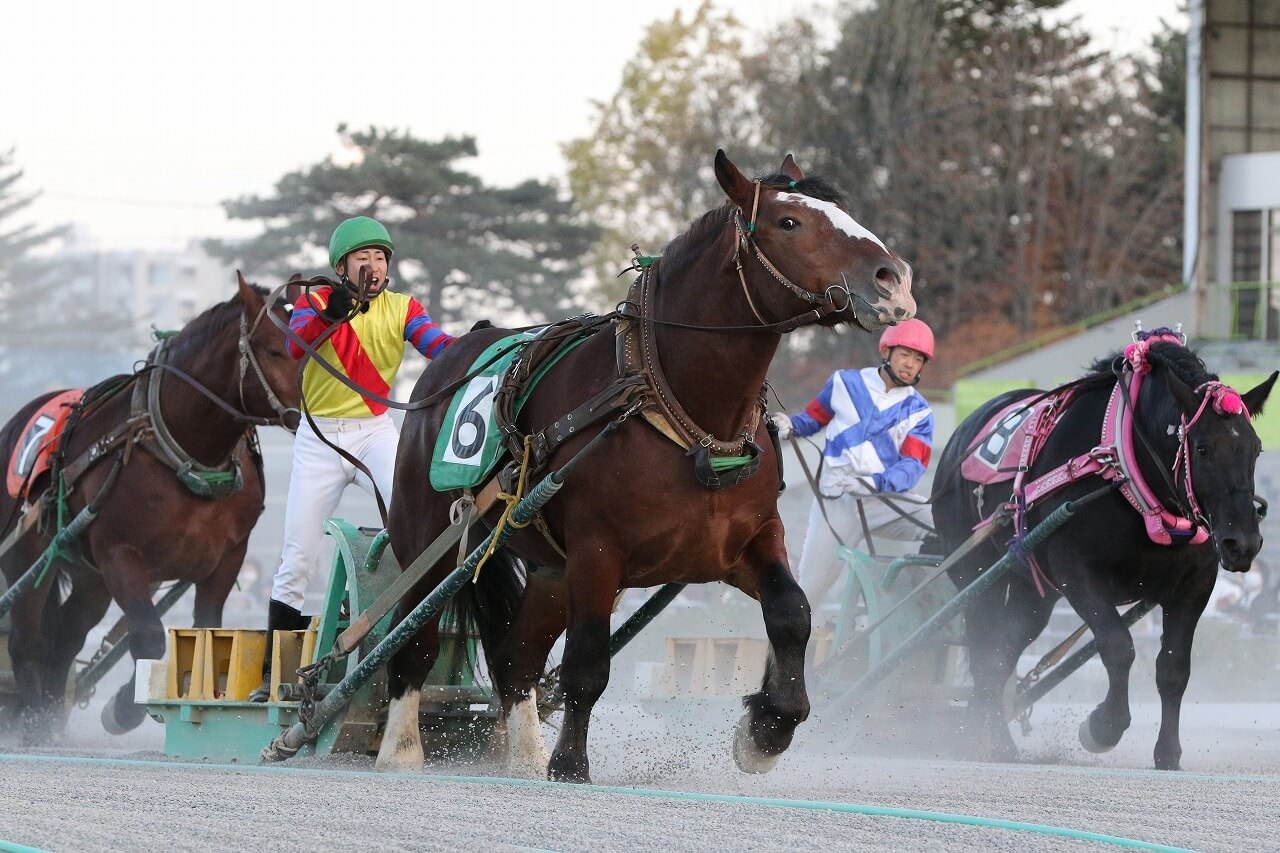 Horse Racing, Farm Work and Only the Freshest Food: Dive Deep into the Local Culture of Tokachi!