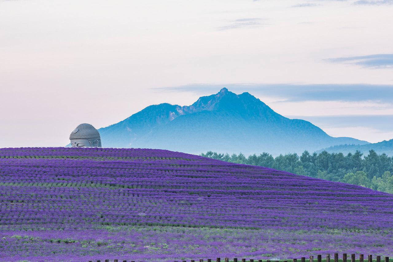 A Buddha Rises Among the Lavender Fields of Makomanai Takino Cemetery