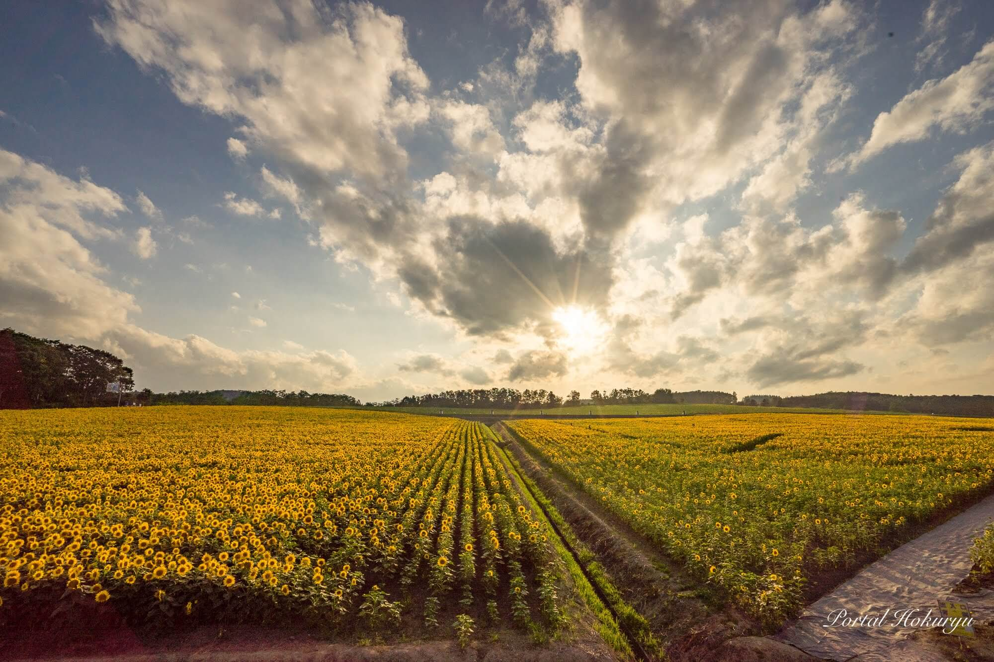 Get Lost in a Sea of Sunflowers at the Hokuryu Sunflower Village