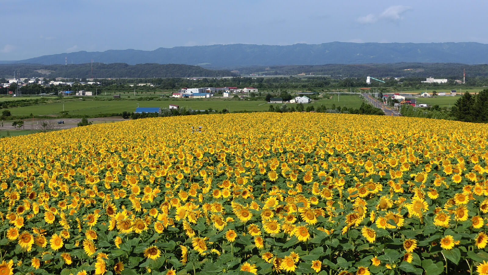 Explore the Beautiful Sun Pillar Park in Nayoro