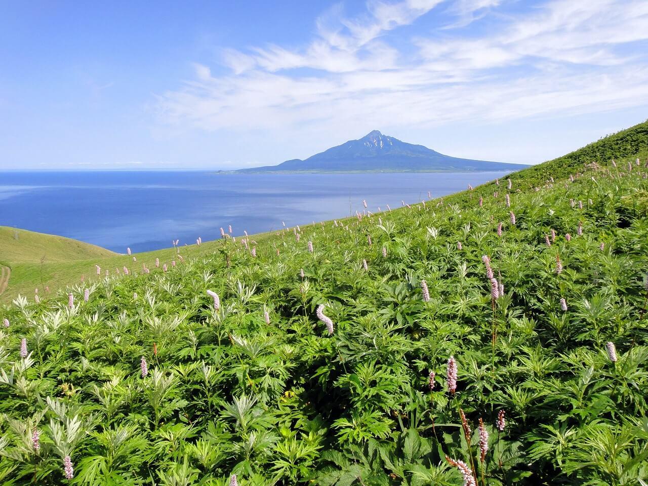 Go Hiking on Distant Rebun Island