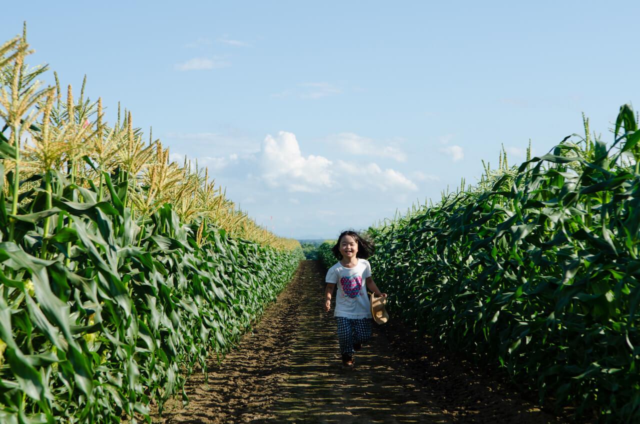 From Field to Blanket: Farm Picnics in Tokachi, Hokkaido
