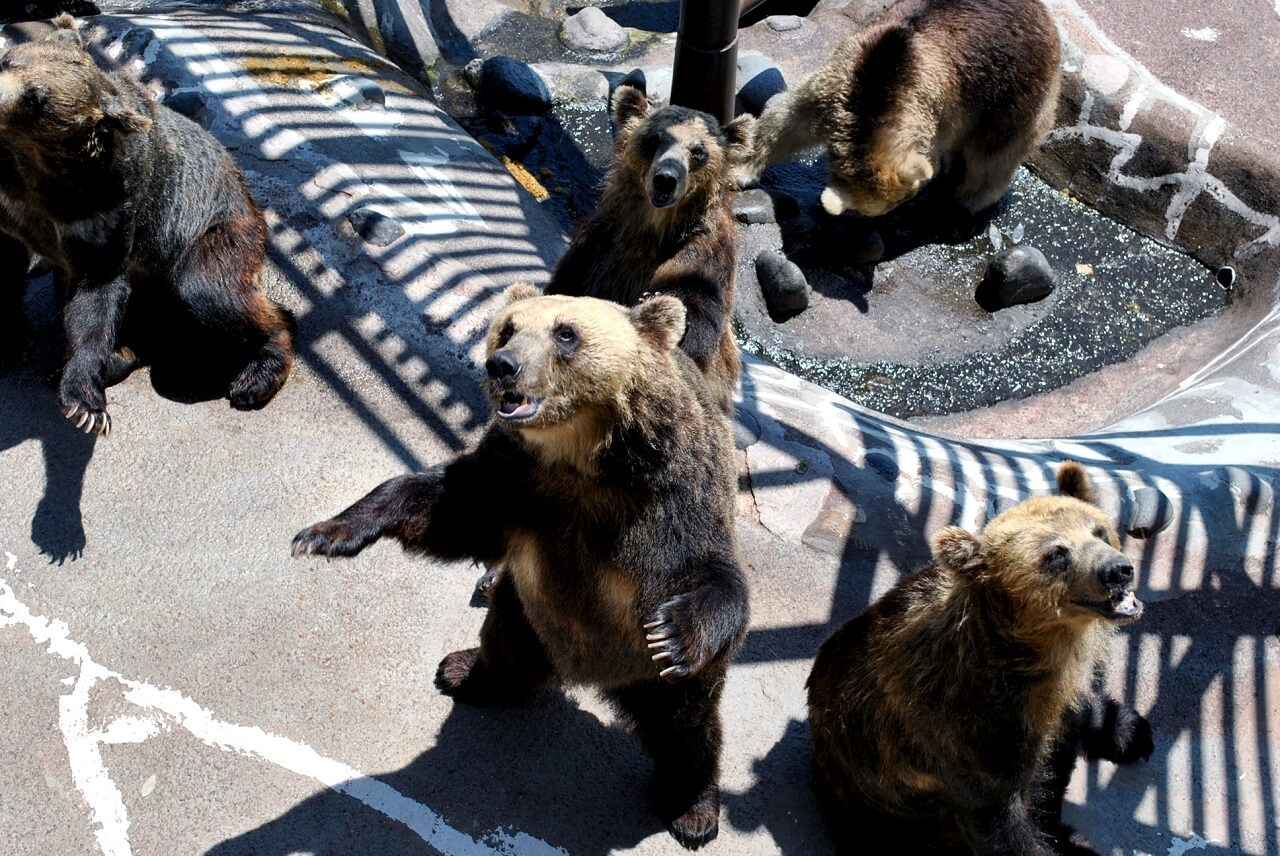 Noboribetsu Bear Park: Get Up Close to Hokkaido's Ezo Bears