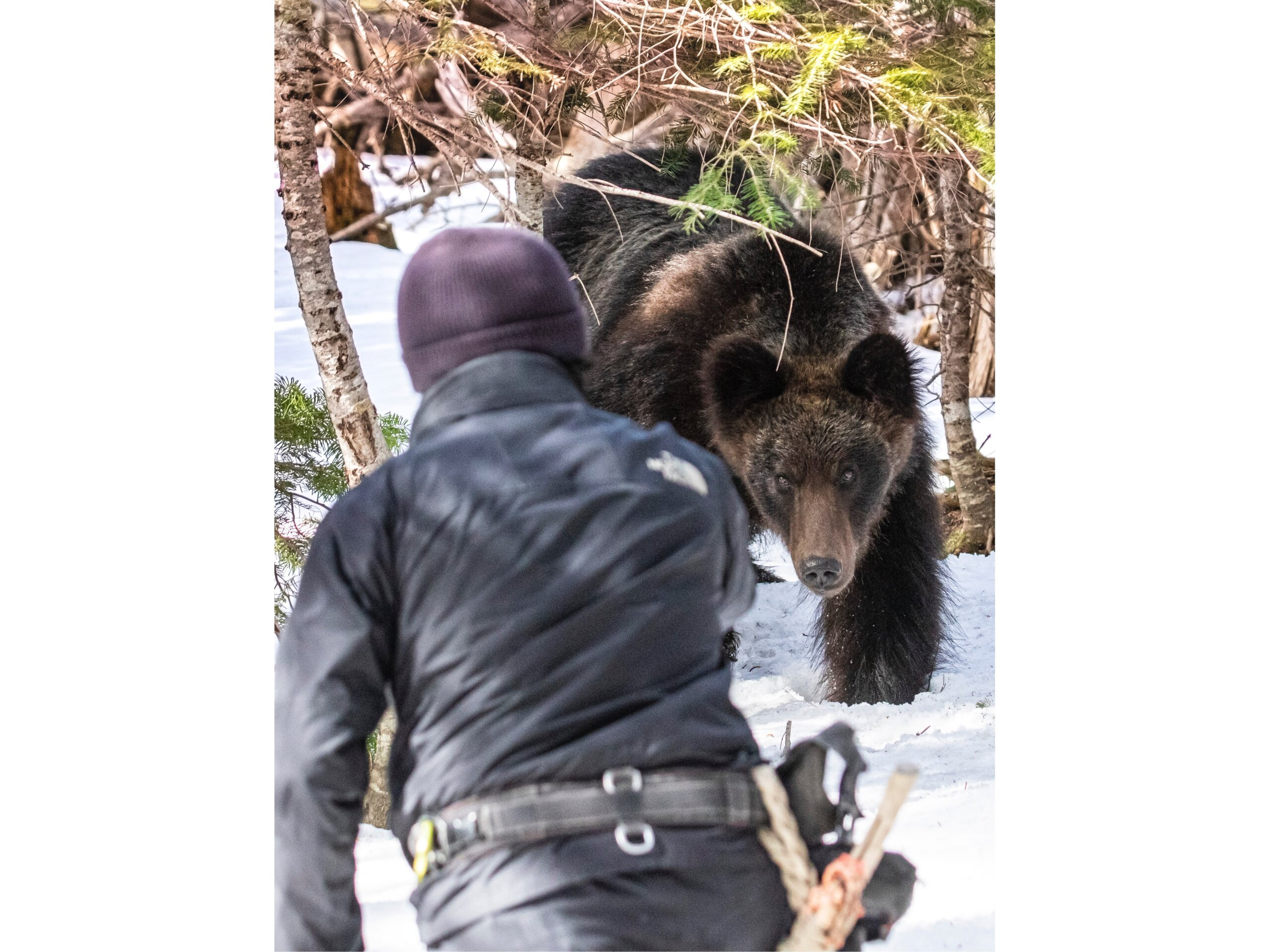 Seeing Kishimoto and his guide, the bear made a beeline for the pair, and made it to within four meters when the photographer managed to get his snap. ⒸKishimoto Hideo