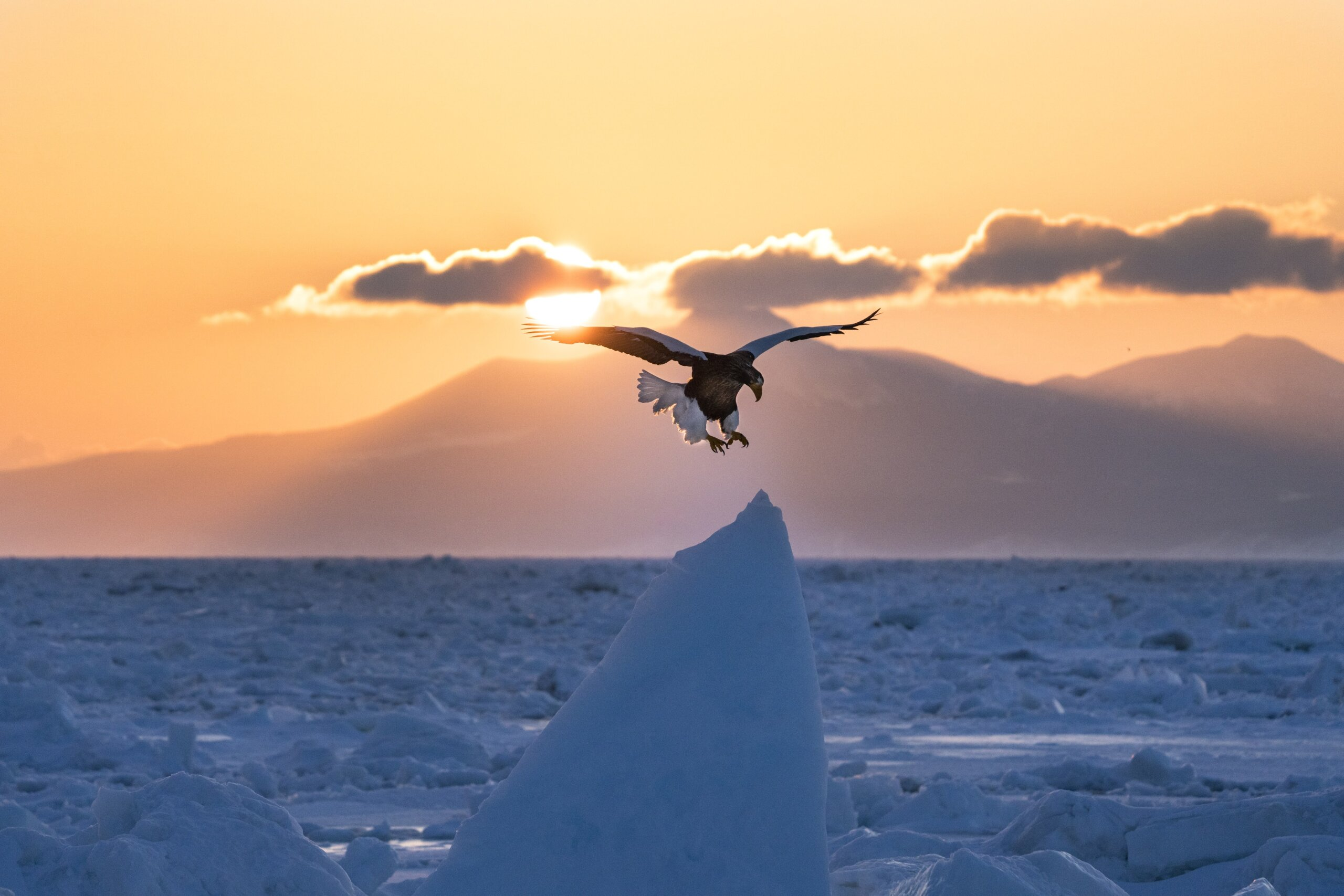 A bird-watching tour that departs from Rausu Port is held every winter. Kishimoto, who participated in the tour one February, photographed the moment when a Steller's sea eagle was about to alight on a block of drift ice. ⒸKishimoto Hideo