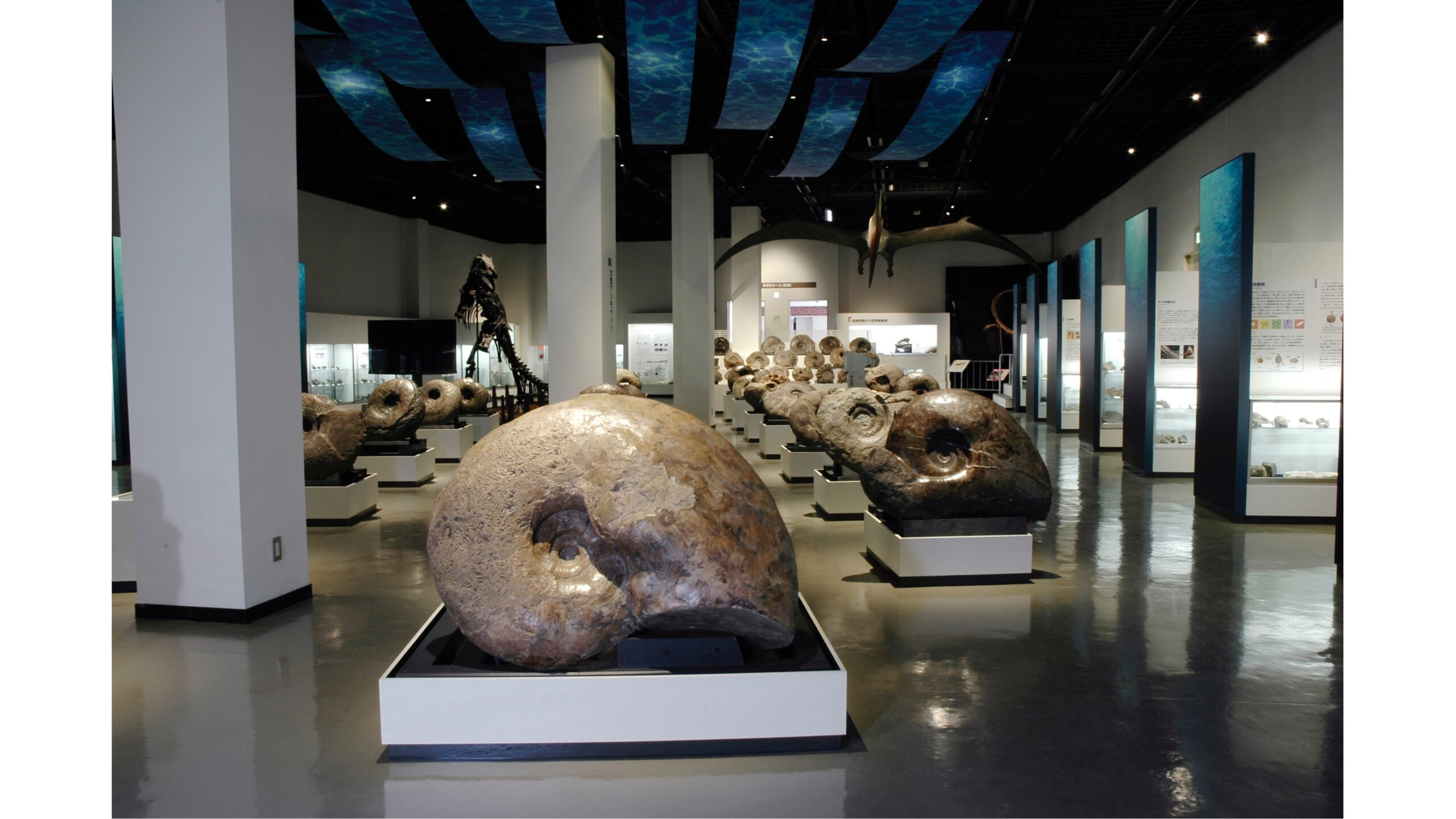Mikasa City Museum, which features more than 1000 fossils including ammonites found in the area. Being able to get up-close to large ammonites and the fossil of the Taniwhasaurus Mikasaensis (a large reptile found in the ocean) makes the experience worthwhile.  photo: Mikasa City Museum