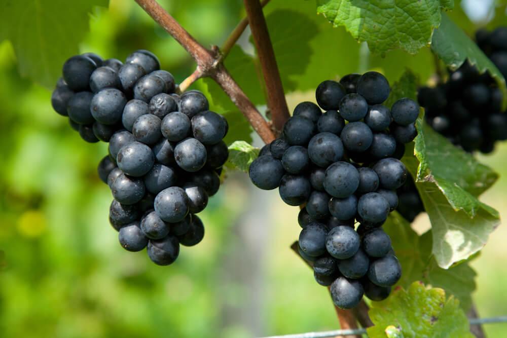Hokkaido Wine