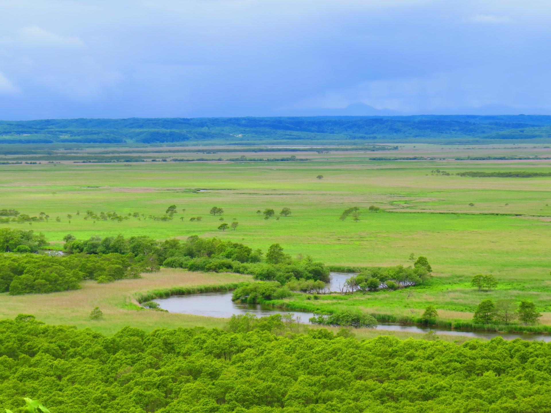 Kushiro Wetland: A Paradise for Shutterbugs and Greenthumbs