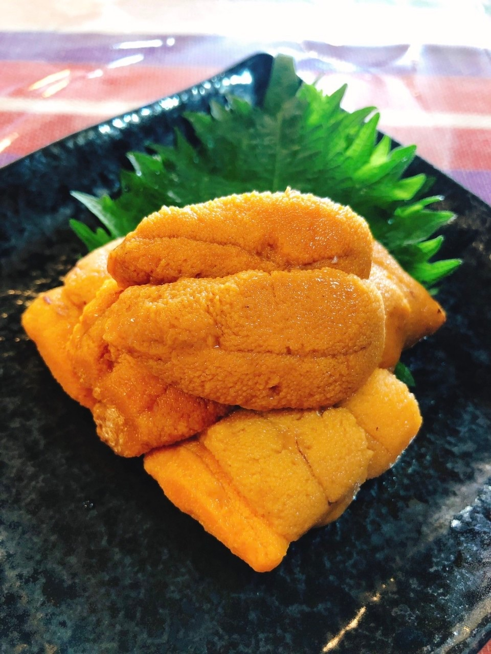Delicacies of Hokkaido: Feast on Fresh Uni in the Costal Town of Rausu!