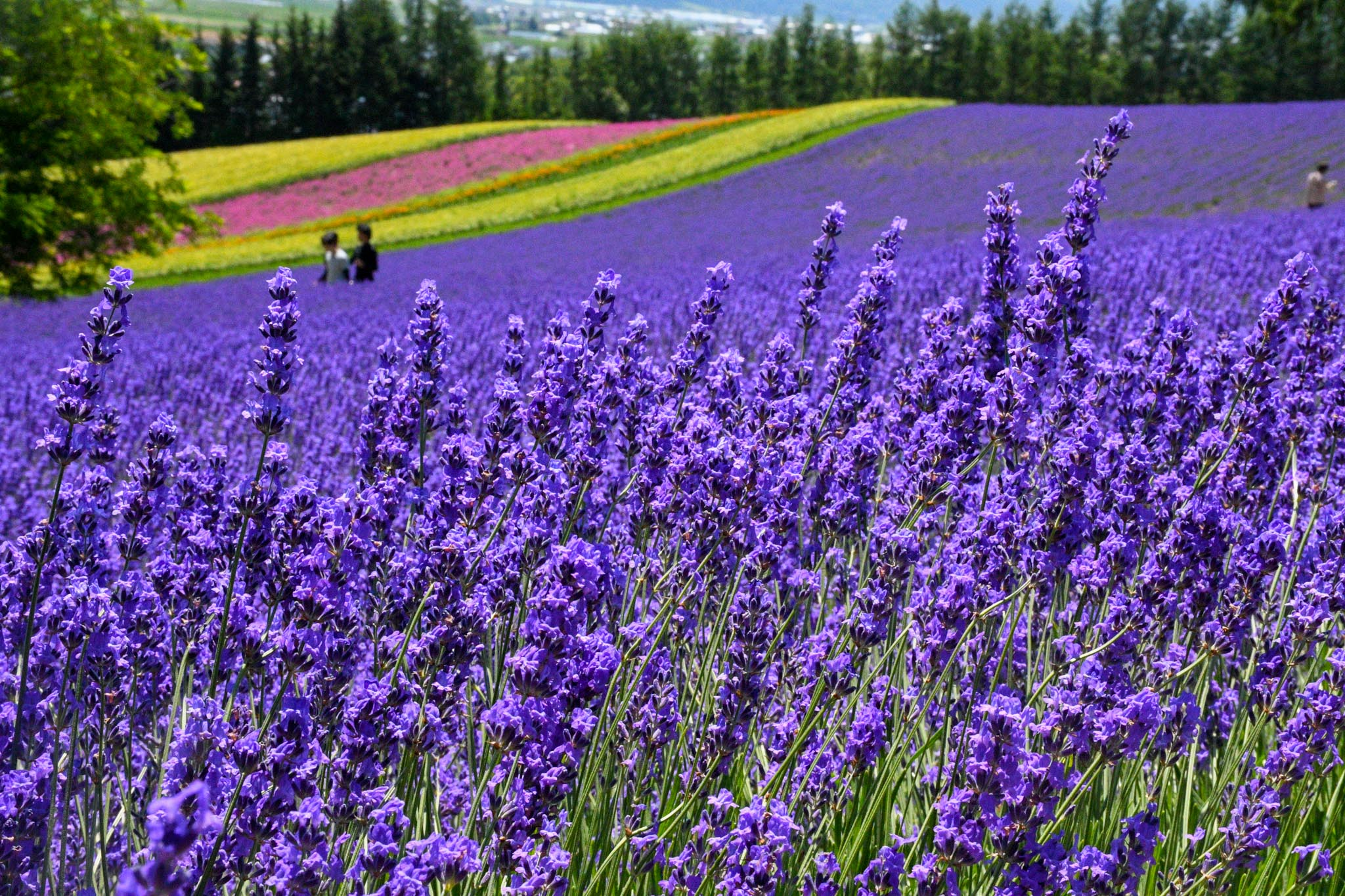 Five Reasons to add Hokkaido to your Japan Summer Itinerary